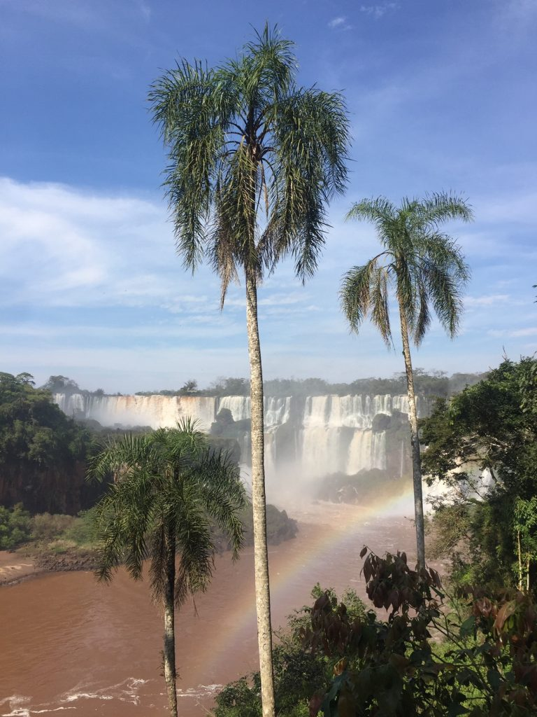 chutes d'iguazu palmiers en premier plan