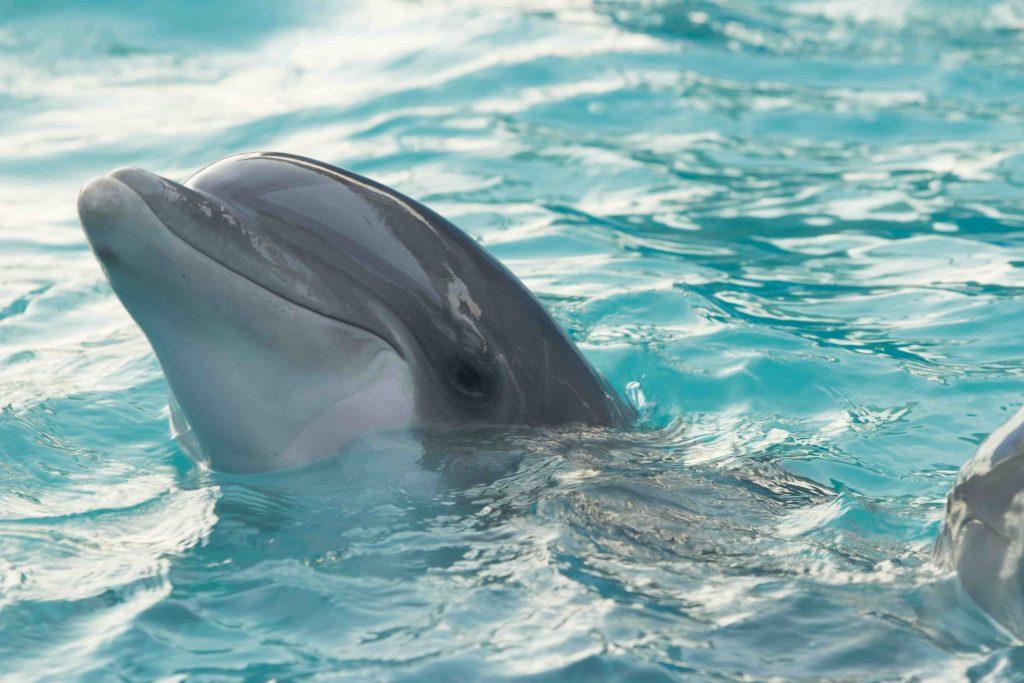 dauphin dans l'eau