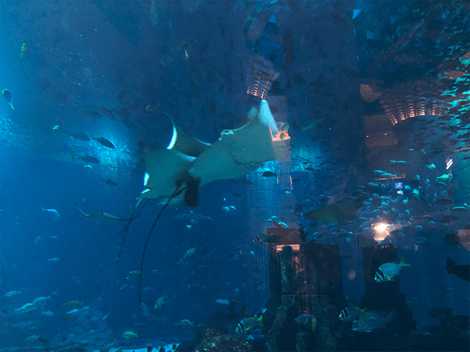 raies manta aquarium dubai